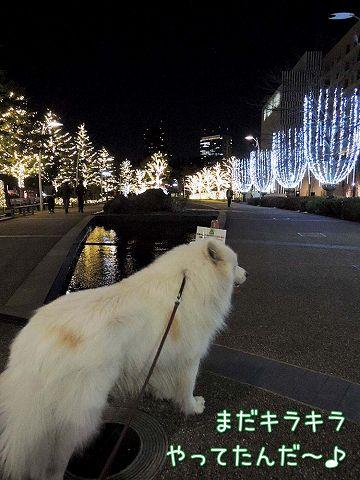 日曜おじ散歩_c0062832_7305530.jpg
