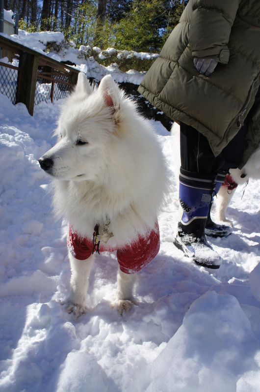 初めての雪遊びへ (前編)_f0128542_10131627.jpg
