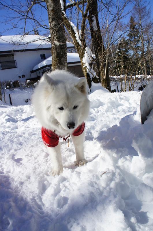 初めての雪遊びへ (前編)_f0128542_1014453.jpg