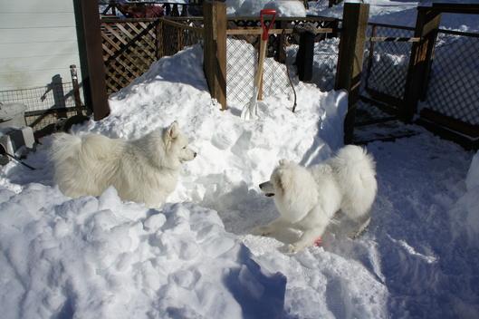 初めての雪遊びへ (前編)_f0128542_10155485.jpg