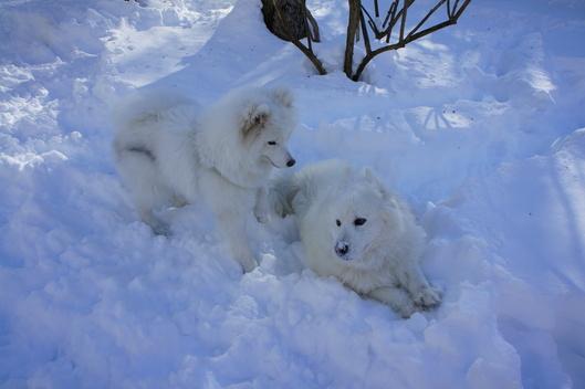 初めての雪遊びへ (前編)_f0128542_10193787.jpg