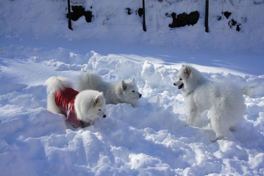 初めての雪遊びへ (前編)_f0128542_10232093.jpg