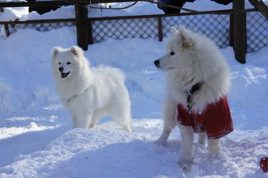 初めての雪遊びへ (前編)_f0128542_10242381.jpg