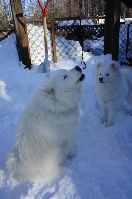初めての雪遊びへ (前編)_f0128542_10255870.jpg