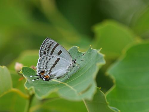 過去の写真からー6月の蝶1-_e0305074_2336165.jpg