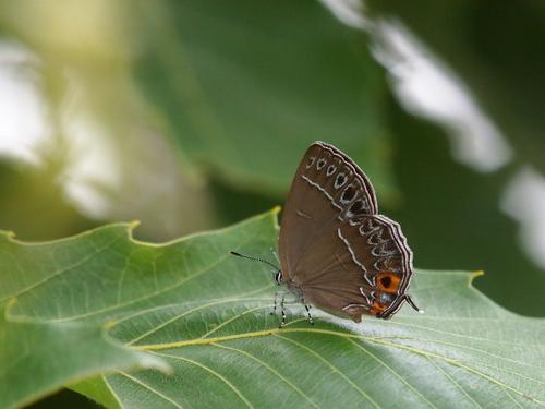 過去の写真からー6月の蝶1-_e0305074_23363294.jpg