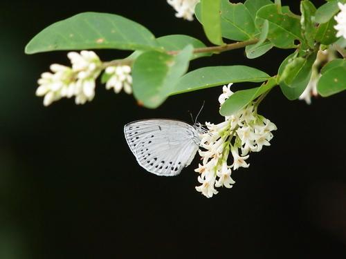 過去の写真からー6月の蝶1-_e0305074_23375596.jpg