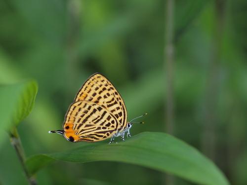 過去の写真からー6月の蝶1-_e0305074_23414443.jpg