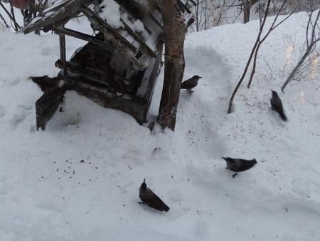 野鳥がたくさん見られる季節_e0120896_814885.jpg