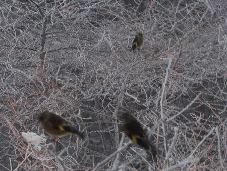 野鳥がたくさん見られる季節_e0120896_825655.jpg