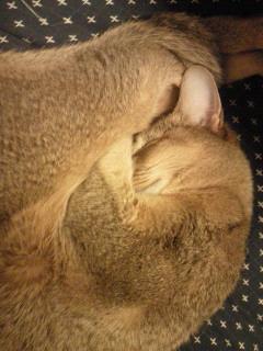 猫丸_f0061797_1512713.jpg