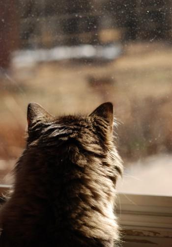 窓の向こうに現れる敵・・・?_b0253205_15481592.jpg