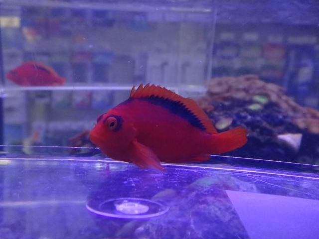 130123 海水魚・水草_f0189122_12244485.jpg