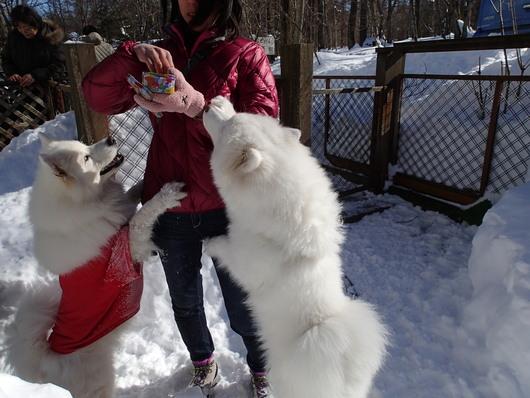 初めての雪遊び (後編)_f0128542_11205366.jpg
