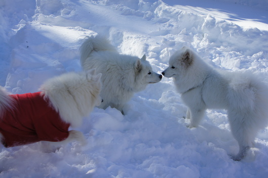 初めての雪遊び (後編)_f0128542_11222722.jpg