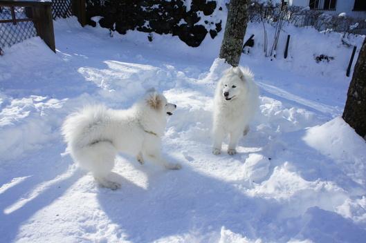 初めての雪遊び (後編)_f0128542_113051100.jpg