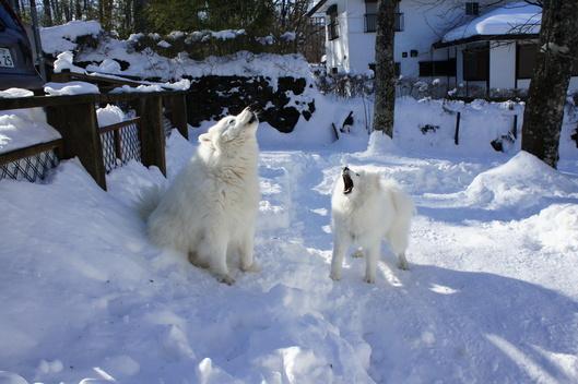 初めての雪遊び (後編)_f0128542_11325745.jpg