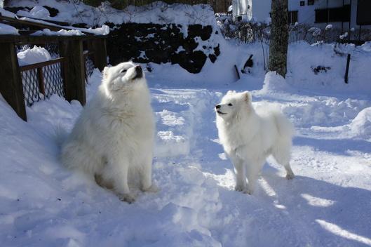 初めての雪遊び (後編)_f0128542_11354784.jpg