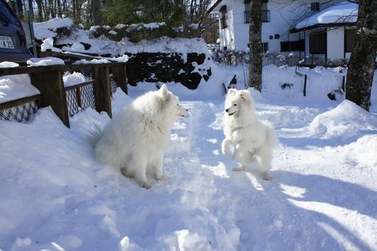 初めての雪遊び (後編)_f0128542_1135527.jpg