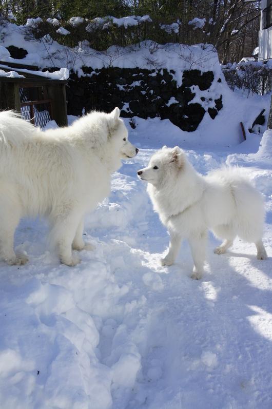 初めての雪遊び (後編)_f0128542_1136463.jpg