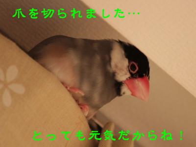 b0158061_2281513.jpg