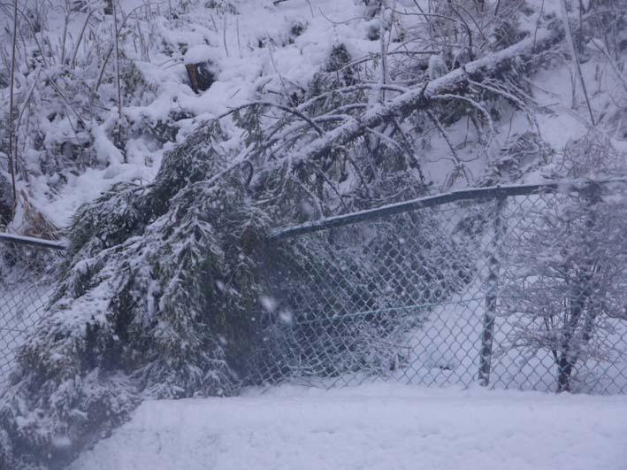 もはや限界点?大雪により六国見山で夥しい数のスギ倒木_c0014967_16441244.jpg