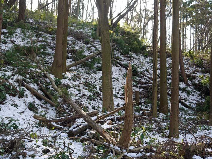 もはや限界点?大雪により六国見山で夥しい数のスギ倒木_c0014967_170336.jpg