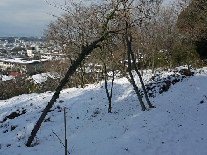 もはや限界点?大雪により六国見山で夥しい数のスギ倒木_c0014967_17155936.jpg