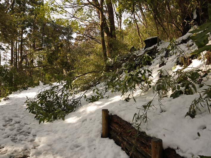 もはや限界点?大雪により六国見山で夥しい数のスギ倒木_c0014967_1716418.jpg