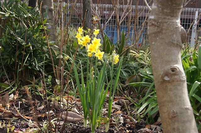 庭の工事 7_e0181373_20471576.jpg