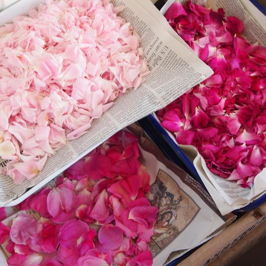 薬用バラの花びらもチンキに_a0292194_058243.jpg