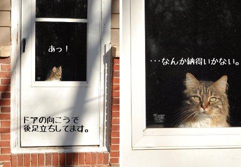窓の向こうに現れる敵・・・?_b0253205_211773.jpg