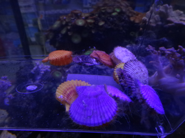 130124 海水魚・熱帯魚・水草_f0189122_12421841.jpg