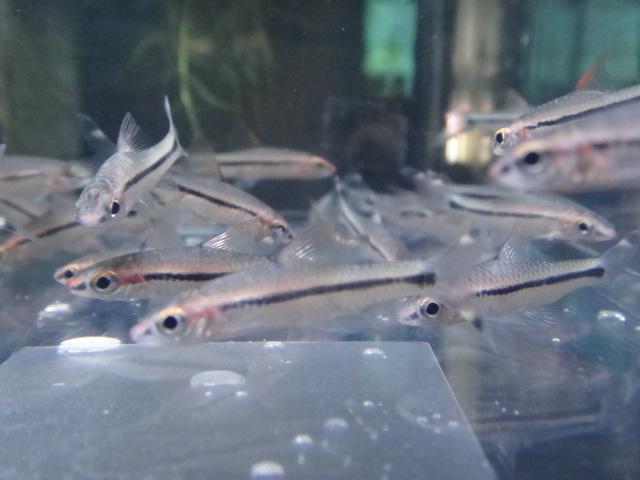 130124 海水魚・熱帯魚・水草_f0189122_12485974.jpg