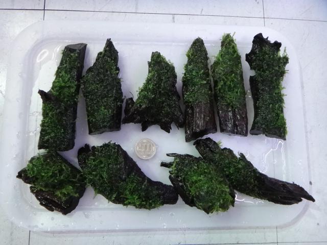 130124 海水魚・熱帯魚・水草_f0189122_125435.jpg
