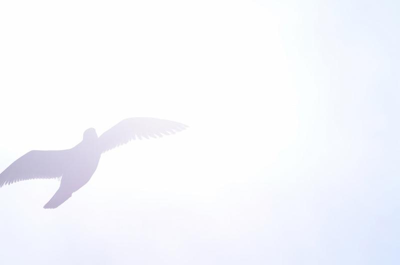 カモメが翔んだ日~♪_c0024254_2144855.jpg