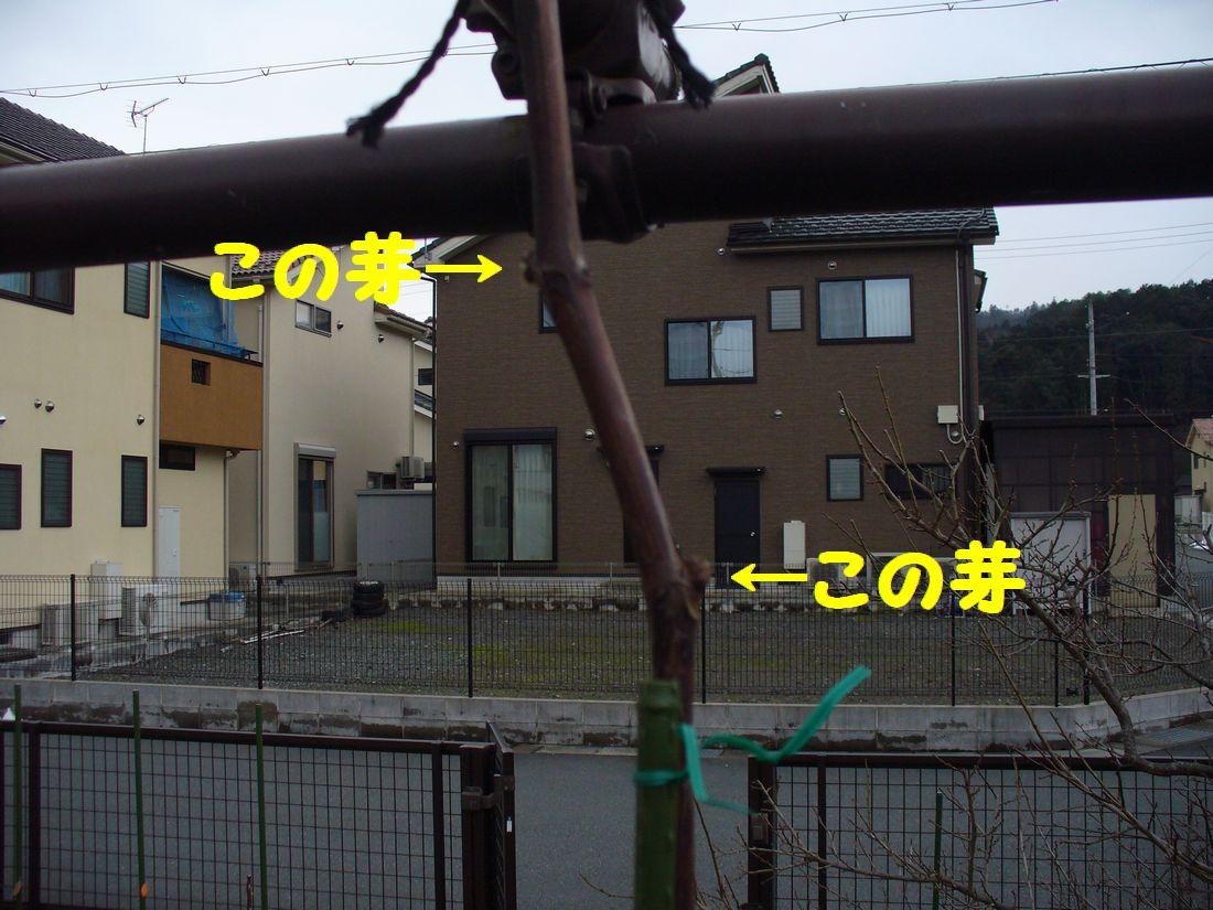 f0217971_21212151.jpg