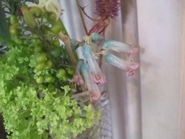 オークリーフ(お出迎えの花たち)_f0049672_17435779.jpg