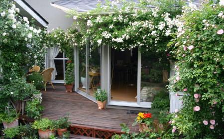 ◆裏庭のバラの誘引がほぼ終了・・・・・_e0154682_23133063.jpg