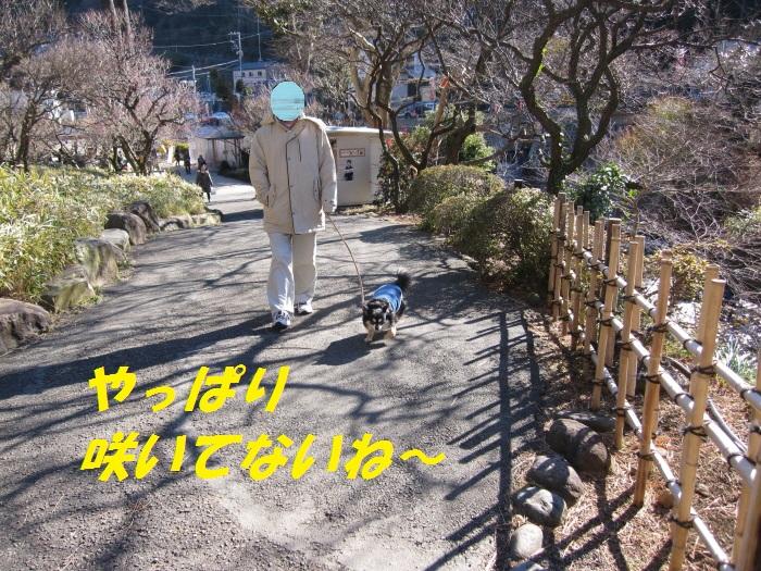 b0150088_84302.jpg