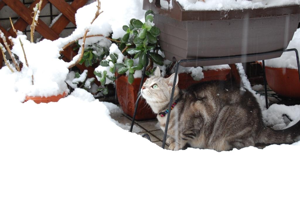 もう、雪は・・・_b0054391_7135584.jpg