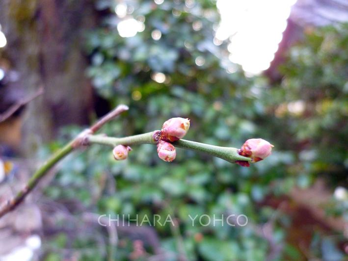 春遠からじ_b0025511_11104485.jpg