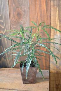 植物新入り_d0263815_18491535.jpg