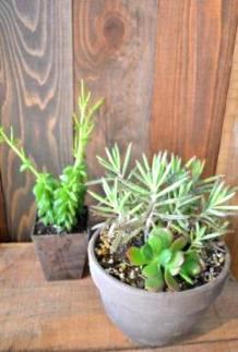 植物新入り_d0263815_1849401.jpg