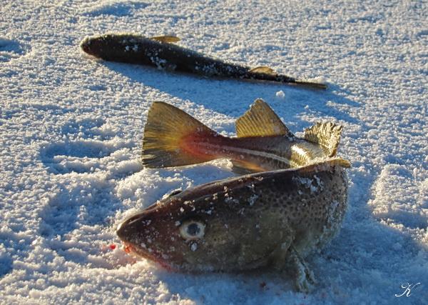 凍った海の上の散歩_a0086828_048942.jpg
