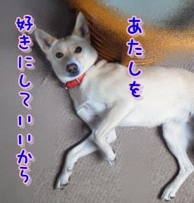 f0195543_0245460.jpg