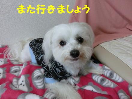b0193480_15582691.jpg