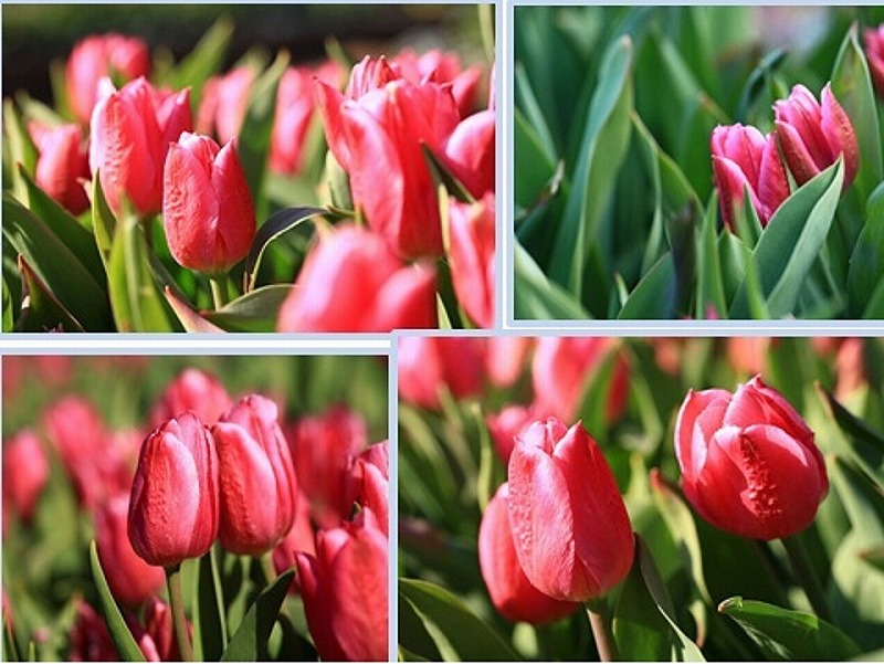 春遠からじ②_e0305388_1010448.jpg