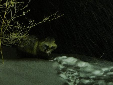 雪降りの夜_e0120896_7562031.jpg