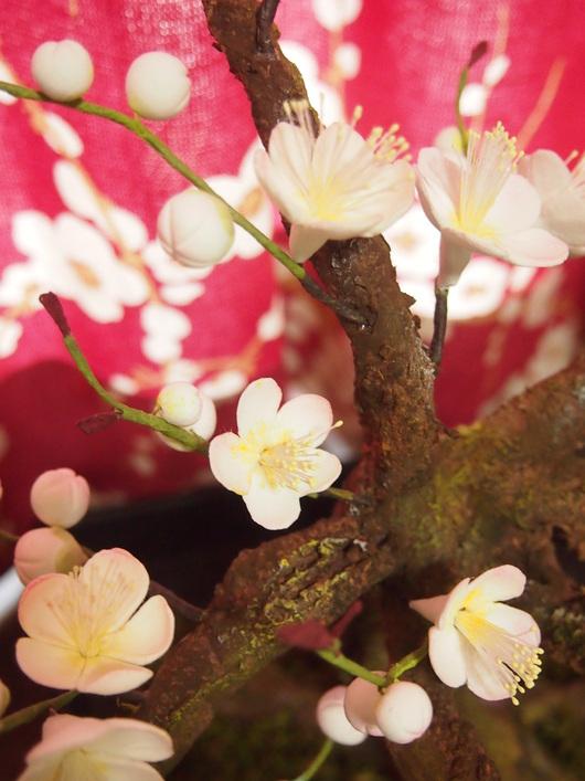 梅「THE盆栽」 開花宣言_a0230197_17294227.jpg